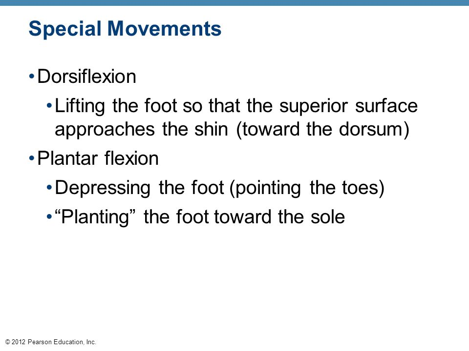 © 2012 Pearson Education, Inc. Special Movements Dorsiflexion Lifting the foot so that the superior surface approaches the shin (toward the dorsum) Pl