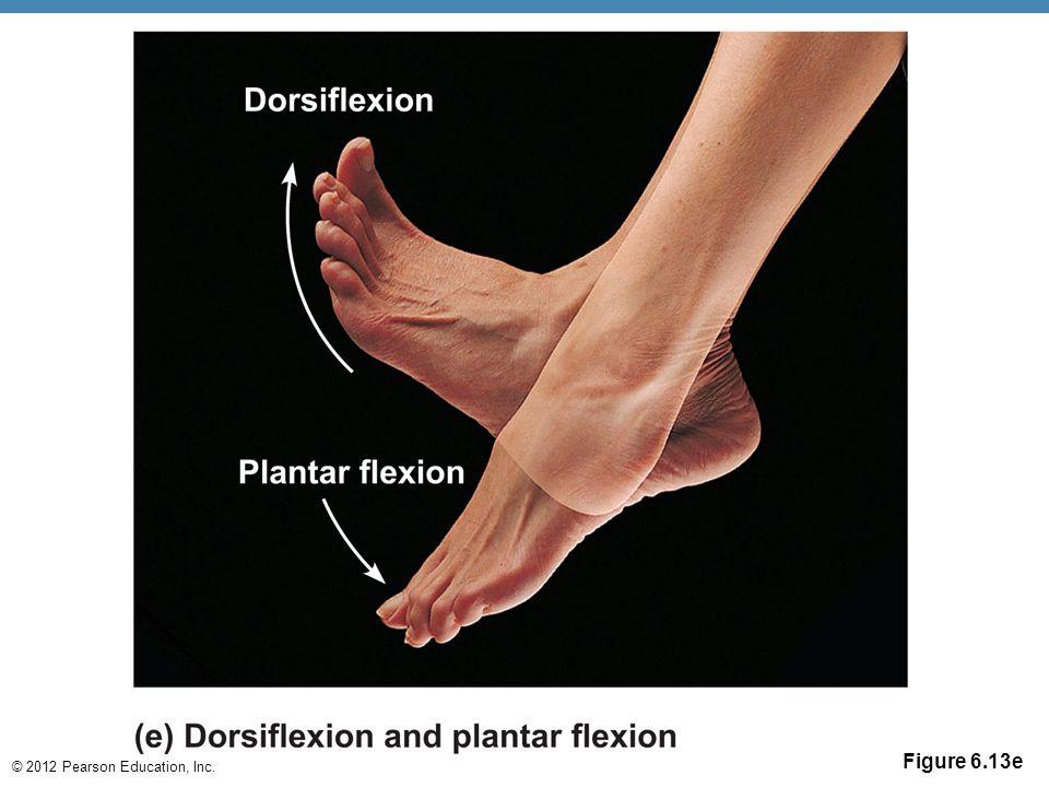 © 2012 Pearson Education, Inc. Figure 6.13e