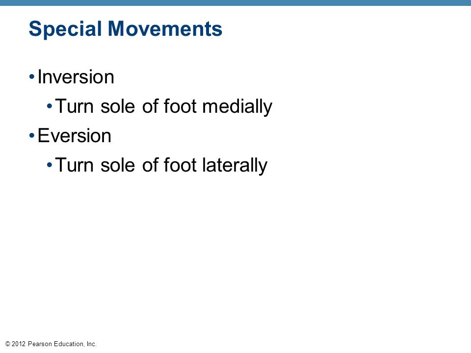 © 2012 Pearson Education, Inc. Special Movements Inversion Turn sole of foot medially Eversion Turn sole of foot laterally