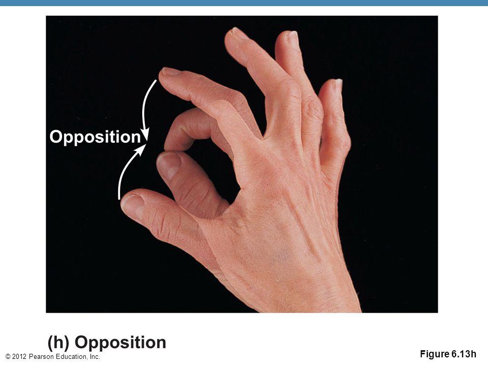 © 2012 Pearson Education, Inc. Figure 6.13h