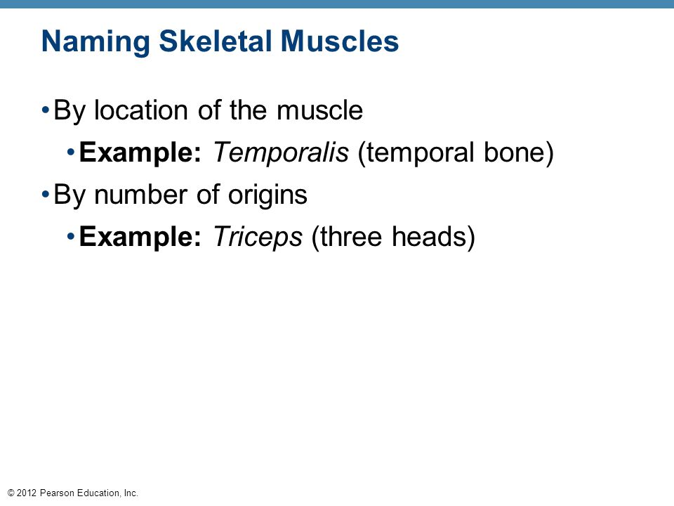© 2012 Pearson Education, Inc. Naming Skeletal Muscles By location of the muscle Example: Temporalis (temporal bone) By number of origins Example: Tri