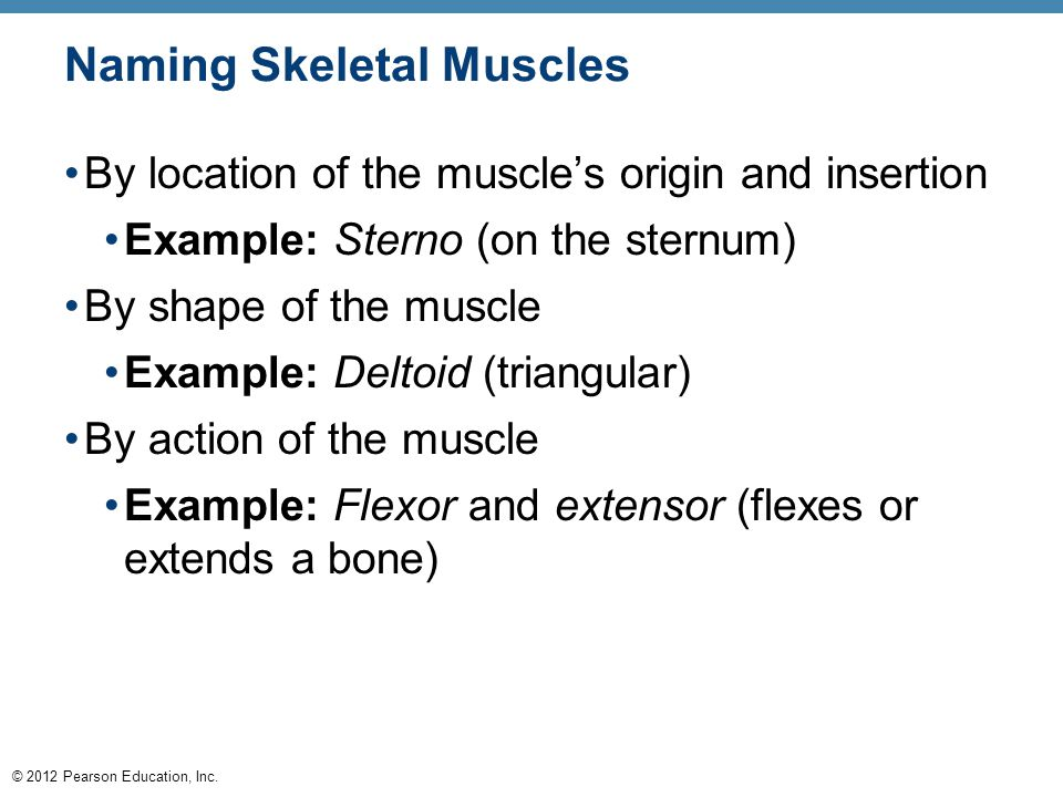 © 2012 Pearson Education, Inc. Naming Skeletal Muscles By location of the muscle's origin and insertion Example: Sterno (on the sternum) By shape of t