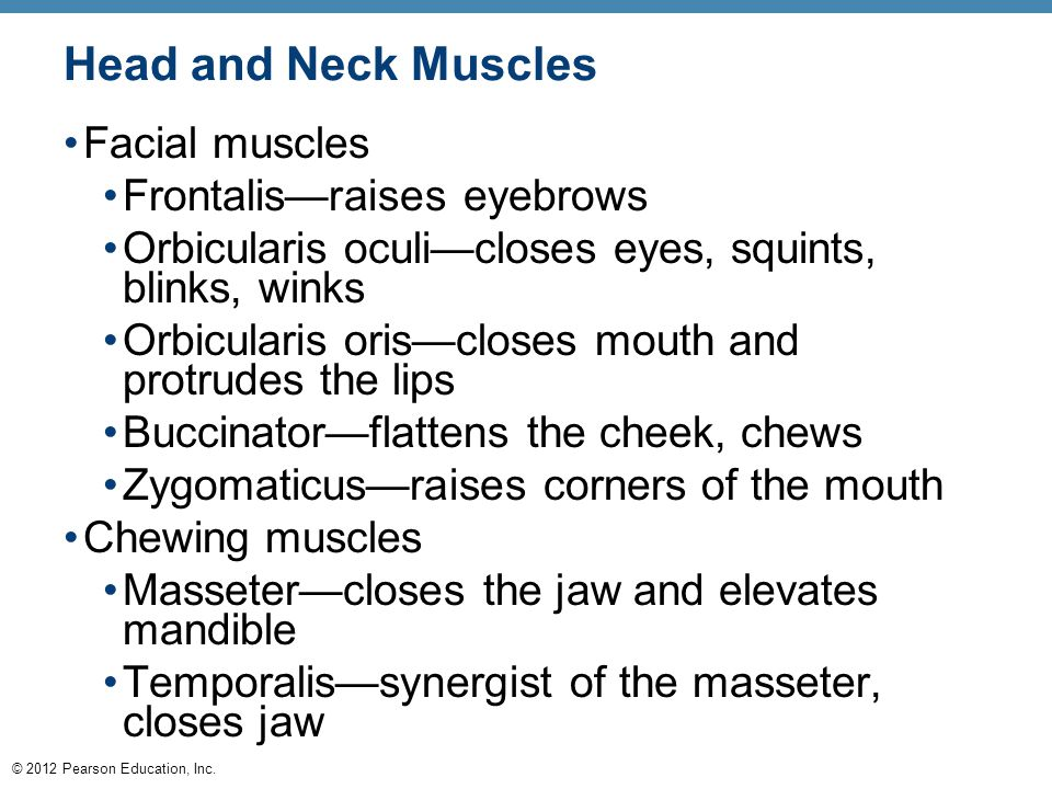 © 2012 Pearson Education, Inc. Head and Neck Muscles Facial muscles Frontalis—raises eyebrows Orbicularis oculi—closes eyes, squints, blinks, winks Or