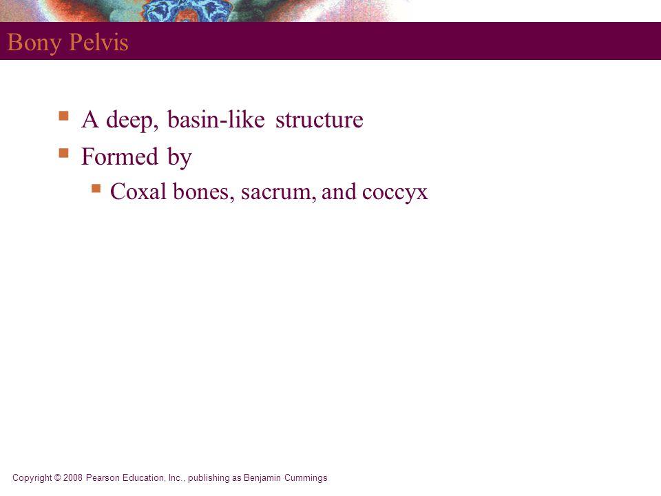 Copyright © 2008 Pearson Education, Inc., publishing as Benjamin Cummings Bony Pelvis  A deep, basin-like structure  Formed by  Coxal bones, sacrum