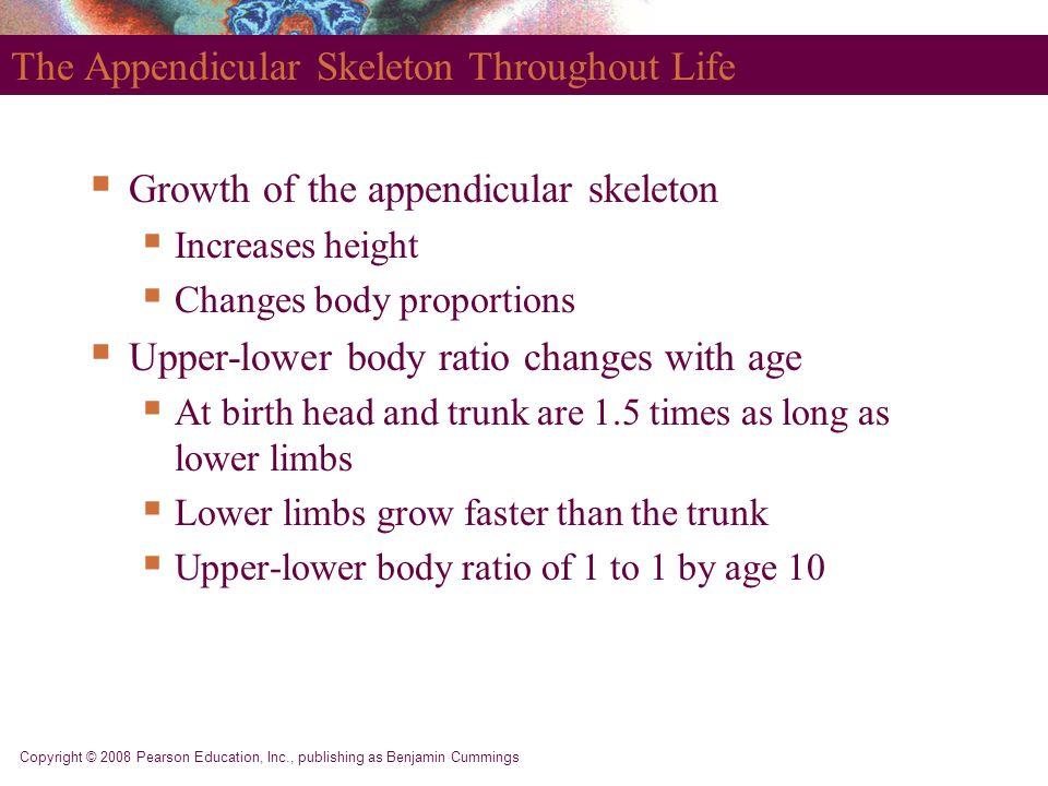 Copyright © 2008 Pearson Education, Inc., publishing as Benjamin Cummings The Appendicular Skeleton Throughout Life  Growth of the appendicular skele