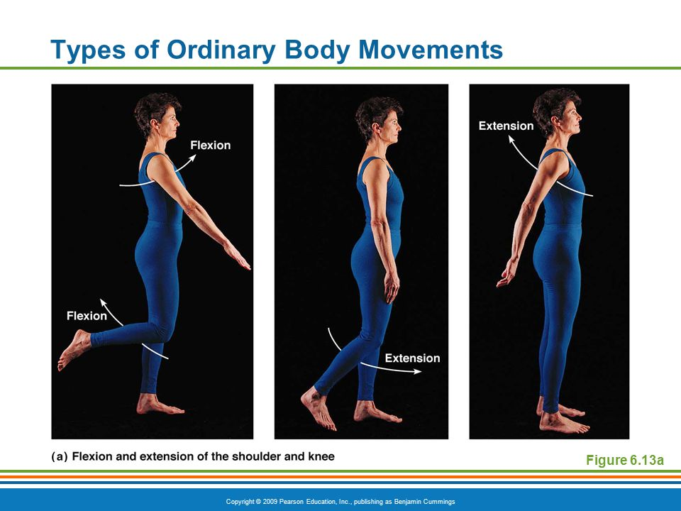 Copyright © 2009 Pearson Education, Inc., publishing as Benjamin Cummings Special Movements  Inversion  Turn sole of foot medially  Eversion  Turn sole of foot laterally