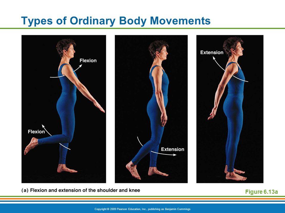 Copyright © 2009 Pearson Education, Inc., publishing as Benjamin Cummings Types of Ordinary Body Movements Figure 6.13b