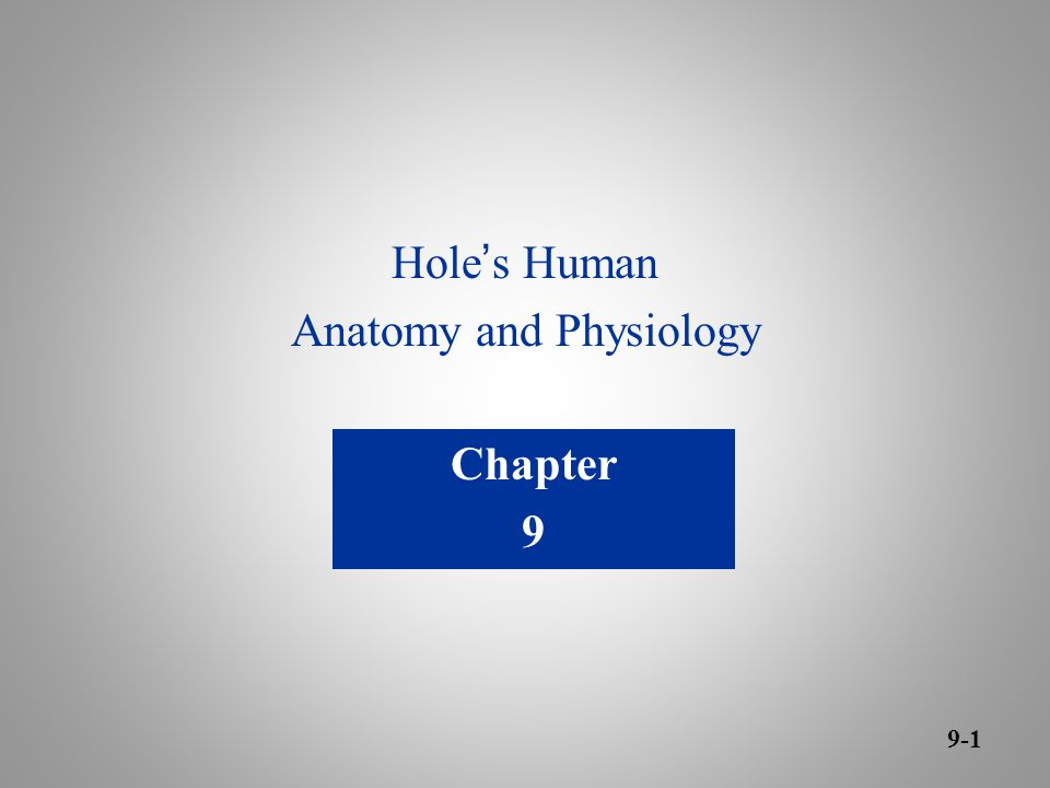 Hole ' s Human Anatomy and Physiology Chapter 9 9-1