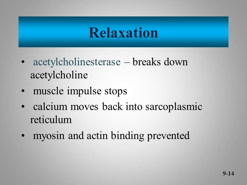 Relaxation acetylcholinesterase – breaks down acetylcholine muscle impulse stops calcium moves back into sarcoplasmic reticulum myosin and actin binding prevented 9-14