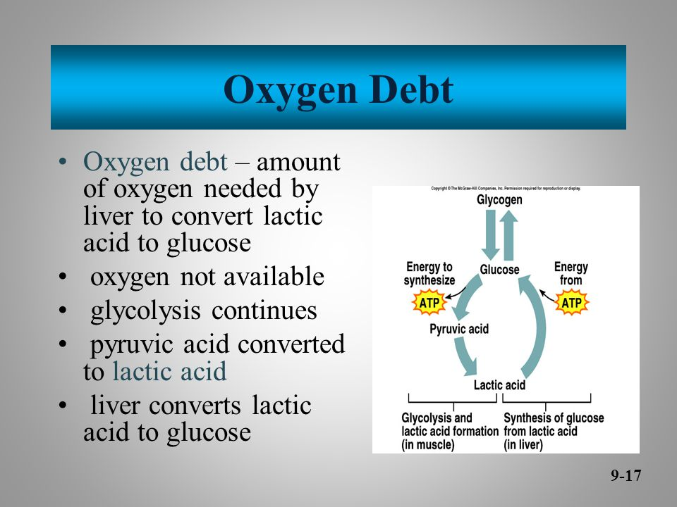 Oxygen Debt Oxygen debt – amount of oxygen needed by liver to convert lactic acid to glucose oxygen not available glycolysis continues pyruvic acid co