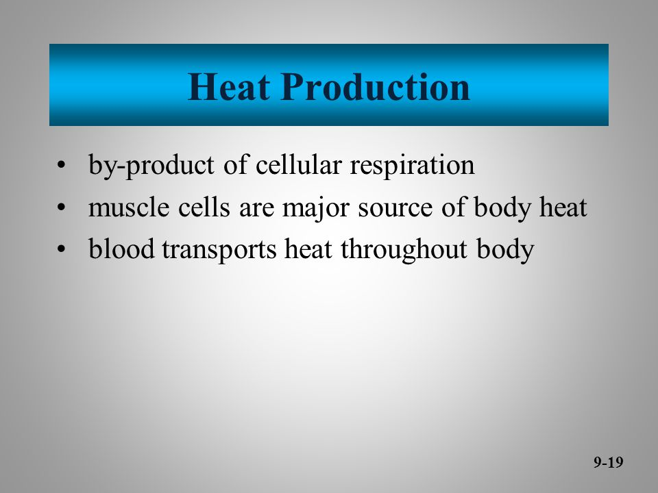 Heat Production by-product of cellular respiration muscle cells are major source of body heat blood transports heat throughout body 9-19