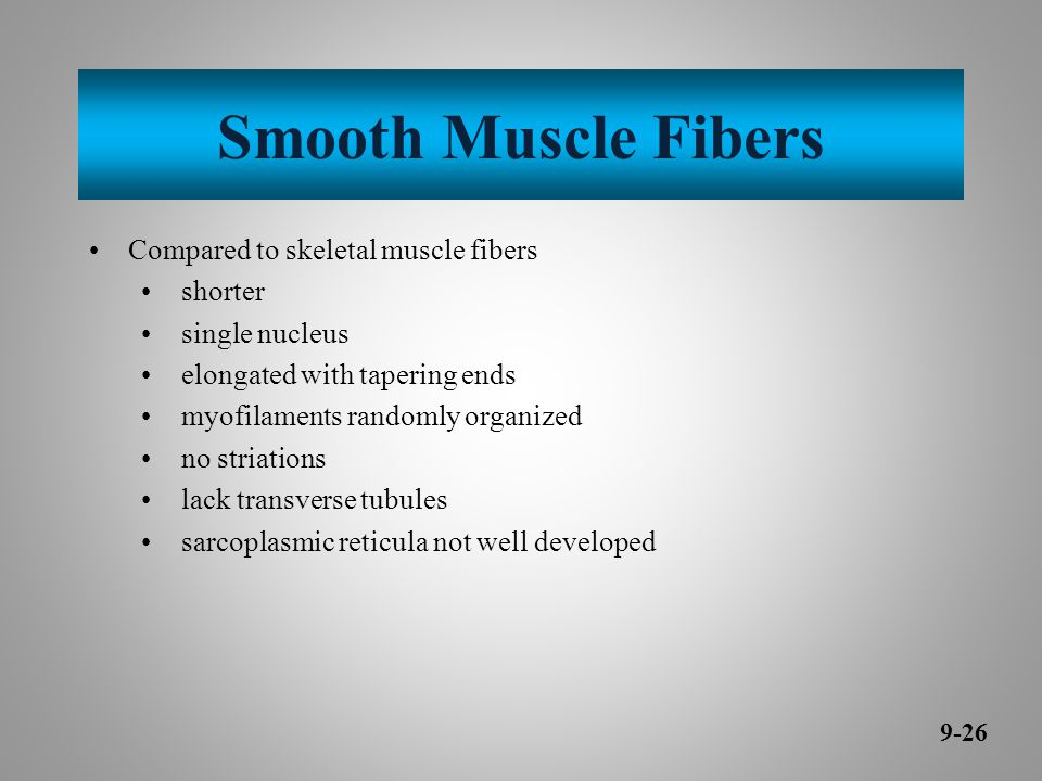 Smooth Muscle Fibers Compared to skeletal muscle fibers shorter single nucleus elongated with tapering ends myofilaments randomly organized no striations lack transverse tubules sarcoplasmic reticula not well developed 9-26
