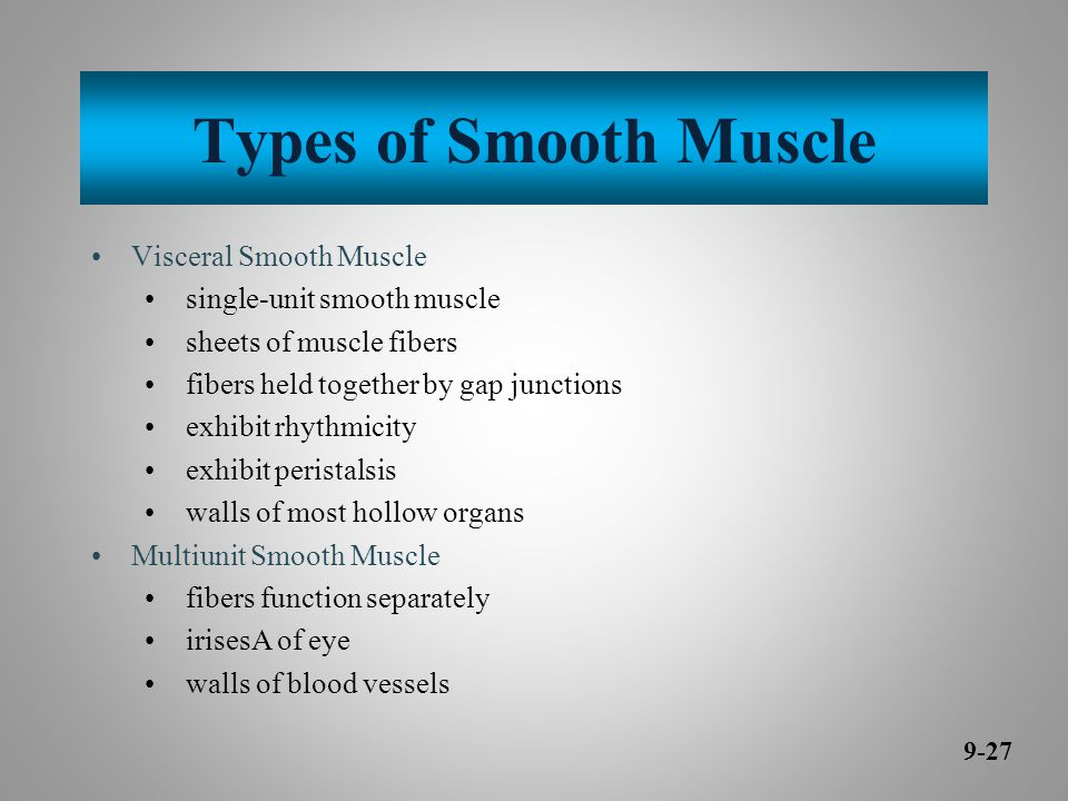 Types of Smooth Muscle Visceral Smooth Muscle single-unit smooth muscle sheets of muscle fibers fibers held together by gap junctions exhibit rhythmicity exhibit peristalsis walls of most hollow organs Multiunit Smooth Muscle fibers function separately irisesA of eye walls of blood vessels 9-27