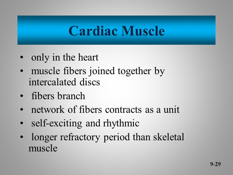 Cardiac Muscle only in the heart muscle fibers joined together by intercalated discs fibers branch network of fibers contracts as a unit self-exciting