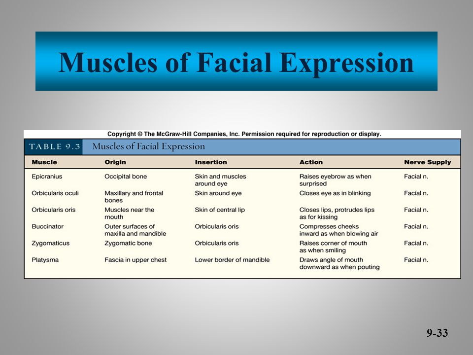 Muscles of Facial Expression 9-33
