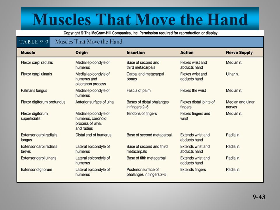 Muscles That Move the Hand 9-43