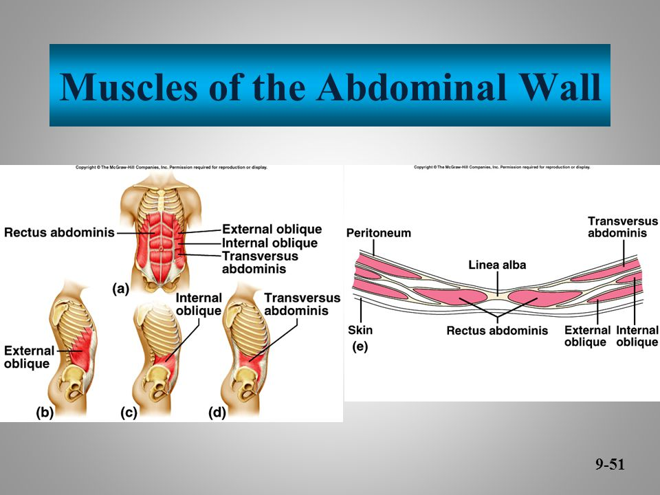 Muscles of the Abdominal Wall 9-51