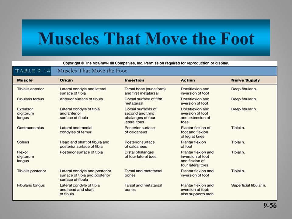 Muscles That Move the Foot 9-56