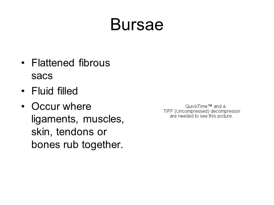 Bursae Flattened fibrous sacs Fluid filled Occur where ligaments, muscles, skin, tendons or bones rub together.