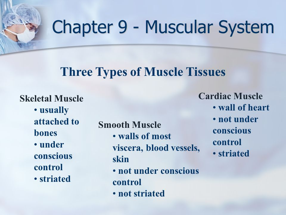 Three Types of Muscle Tissues Skeletal Muscle usually attached to bones under conscious control striated Smooth Muscle walls of most viscera, blood ve