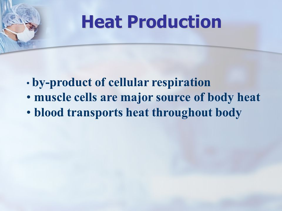 by-product of cellular respiration muscle cells are major source of body heat blood transports heat throughout body Heat Production