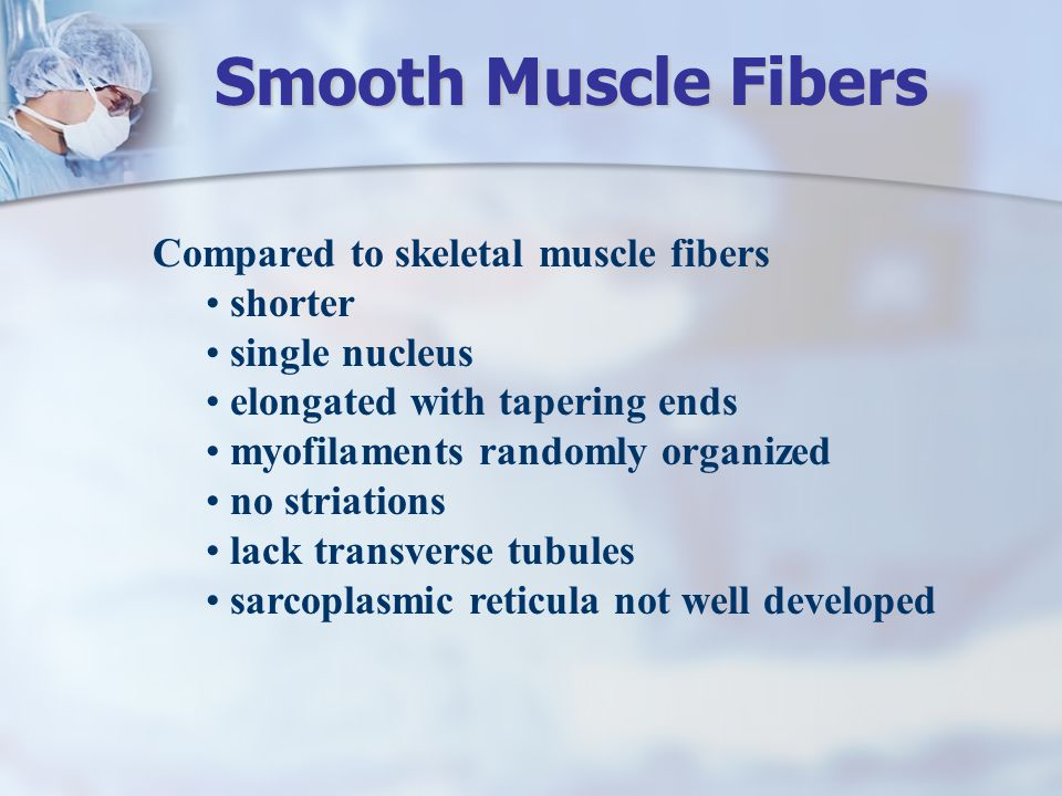Compared to skeletal muscle fibers shorter single nucleus elongated with tapering ends myofilaments randomly organized no striations lack transverse t