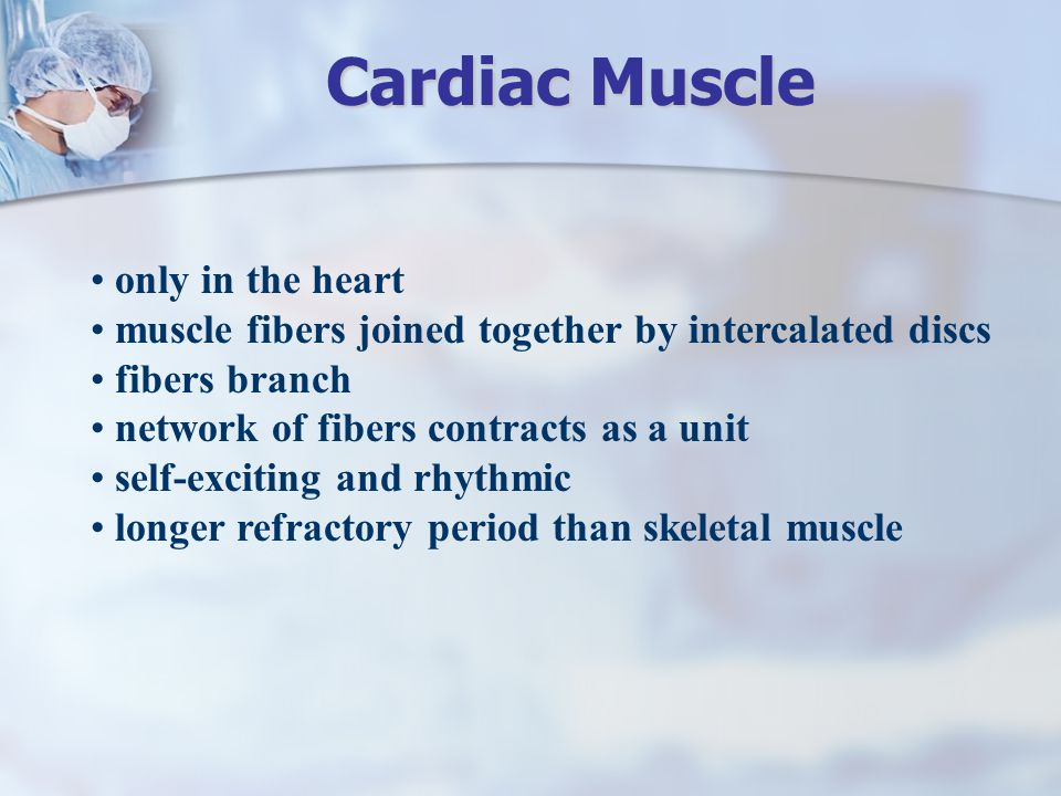 only in the heart muscle fibers joined together by intercalated discs fibers branch network of fibers contracts as a unit self-exciting and rhythmic l