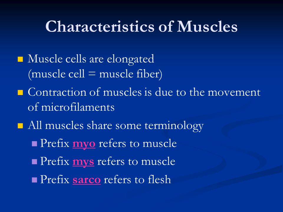 Characteristics of Muscles Muscle cells are elongated (muscle cell = muscle fiber) Contraction of muscles is due to the movement of microfilaments All