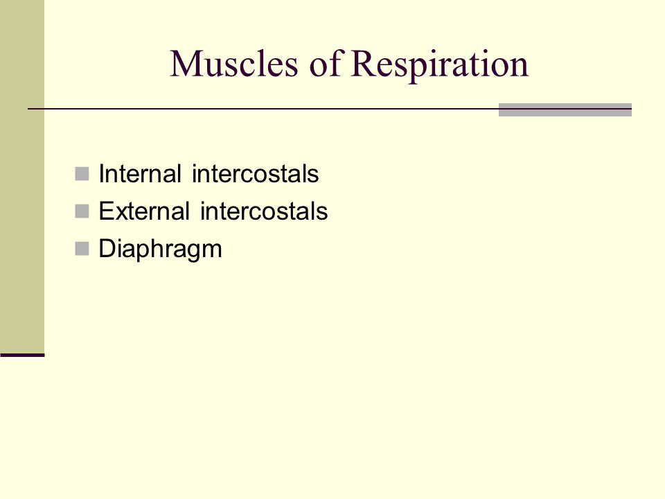 Muscles of Respiration Internal intercostals External intercostals Diaphragm