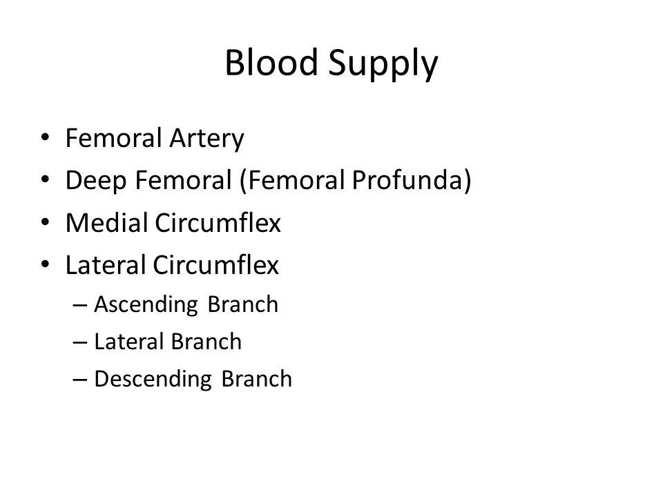 Blood Supply Femoral Artery Deep Femoral (Femoral Profunda) Medial Circumflex Lateral Circumflex – Ascending Branch – Lateral Branch – Descending Bran