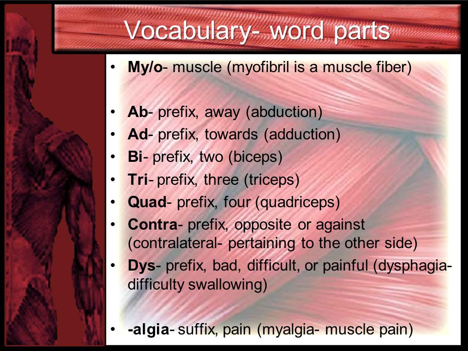 Vocabulary- word parts My/o- muscle (myofibril is a muscle fiber) Ab- prefix, away (abduction) Ad- prefix, towards (adduction) Bi- prefix, two (biceps