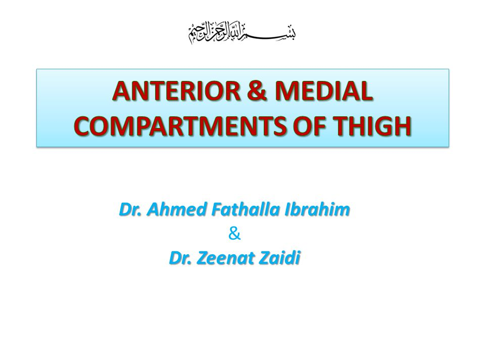 OBJECTIVES At the end of the lecture, students should be able to: the name anterior compartment of thigh.