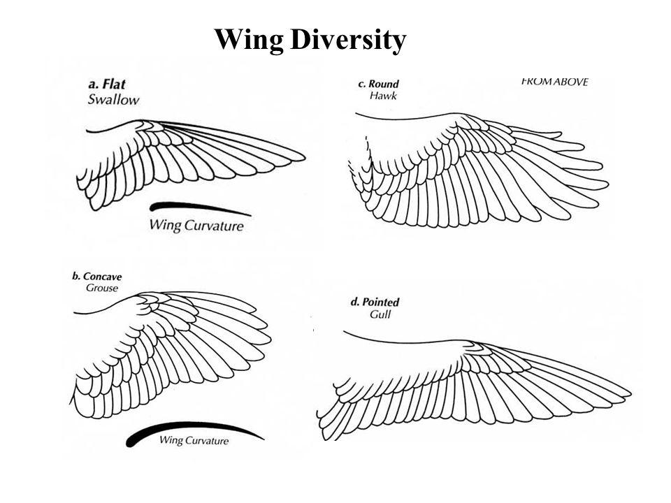 Wing Diversity