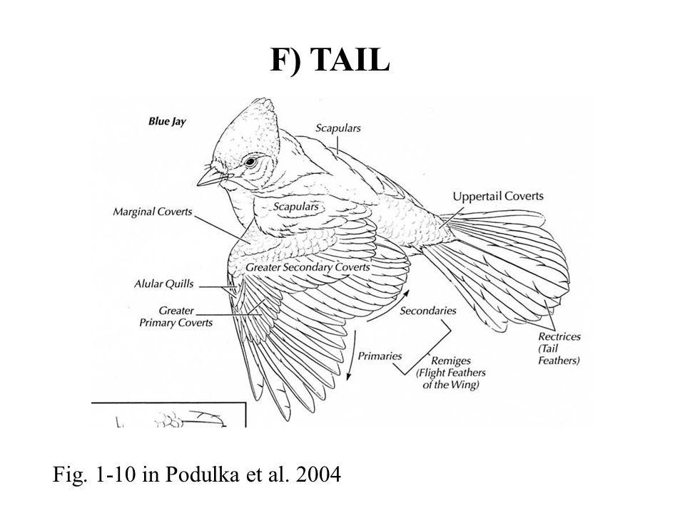 F) TAIL Fig. 1-10 in Podulka et al. 2004