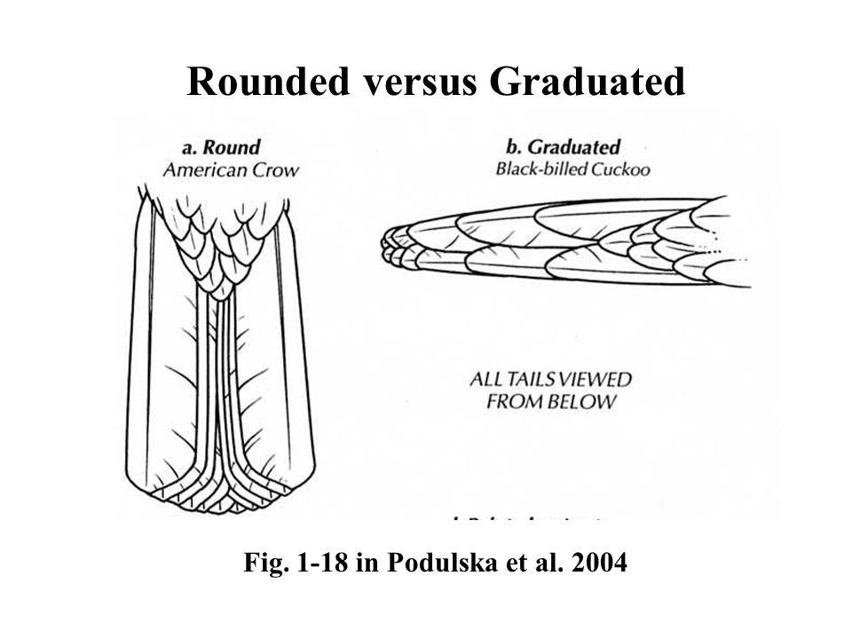 Rounded versus Graduated Fig. 1-18 in Podulska et al. 2004