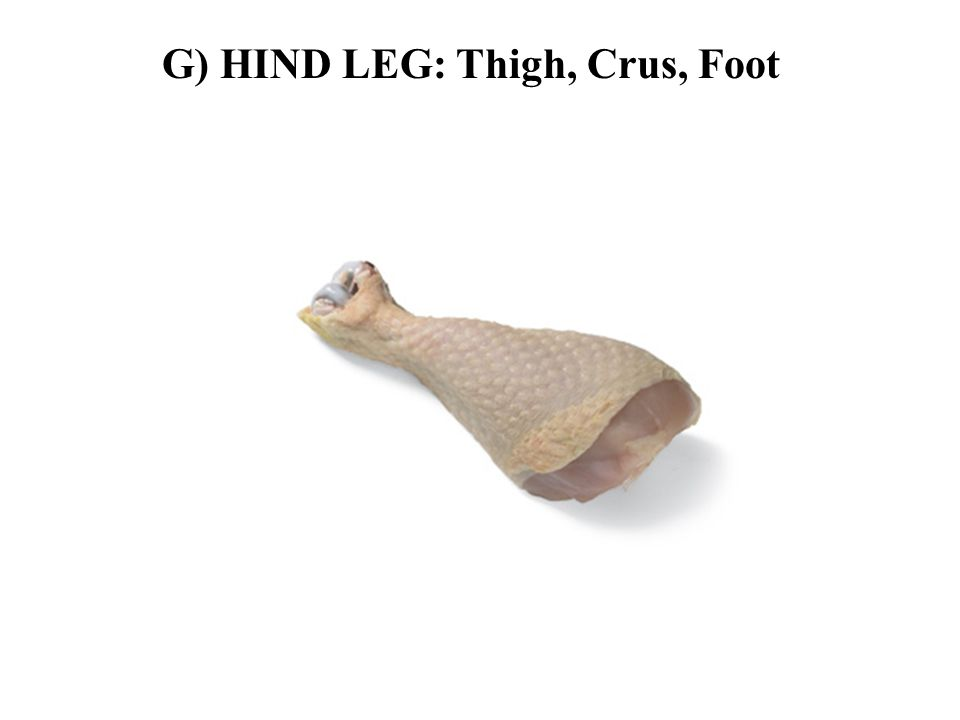 G) HIND LEG: Thigh, Crus, Foot