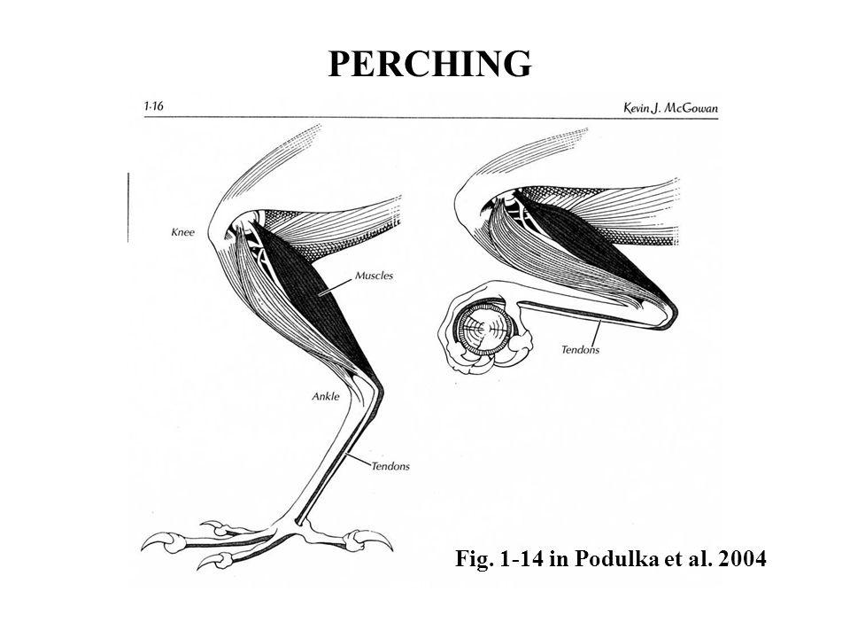 PERCHING Fig. 1-14 in Podulka et al. 2004