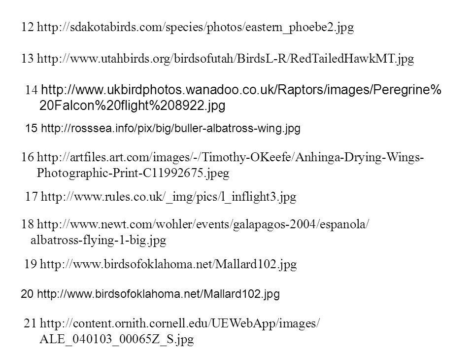12 http://sdakotabirds.com/species/photos/eastern_phoebe2.jpg 13 http://www.utahbirds.org/birdsofutah/BirdsL-R/RedTailedHawkMT.jpg 14 http://www.ukbirdphotos.wanadoo.co.uk/Raptors/images/Peregrine% 20Falcon%20flight%208922.jpg 15 http://rosssea.info/pix/big/buller-albatross-wing.jpg 16 http://artfiles.art.com/images/-/Timothy-OKeefe/Anhinga-Drying-Wings- Photographic-Print-C11992675.jpeg 17 http://www.rules.co.uk/_img/pics/l_inflight3.jpg 18 http://www.newt.com/wohler/events/galapagos-2004/espanola/ albatross-flying-1-big.jpg 19 http://www.birdsofoklahoma.net/Mallard102.jpg 20 http://www.birdsofoklahoma.net/Mallard102.jpg 21 http://content.ornith.cornell.edu/UEWebApp/images/ ALE_040103_00065Z_S.jpg