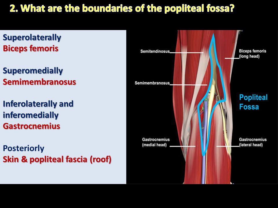 Superolaterally Biceps femoris SuperomediallySemimembranosus Inferolaterally and inferomedially Gastrocnemius Posteriorly Skin & popliteal fascia (roo