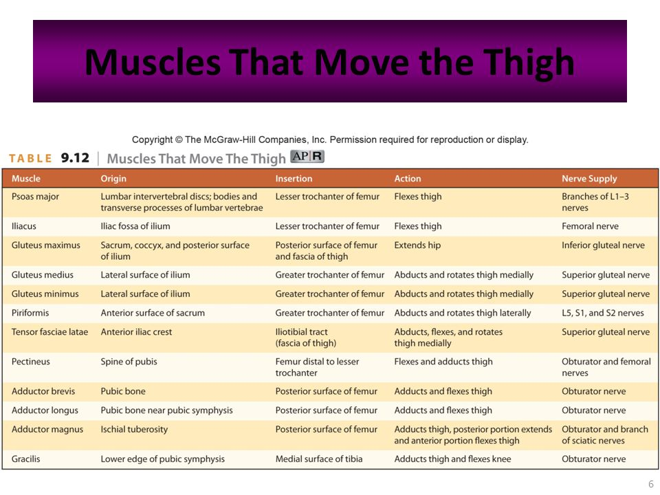 6 Muscles That Move the Thigh