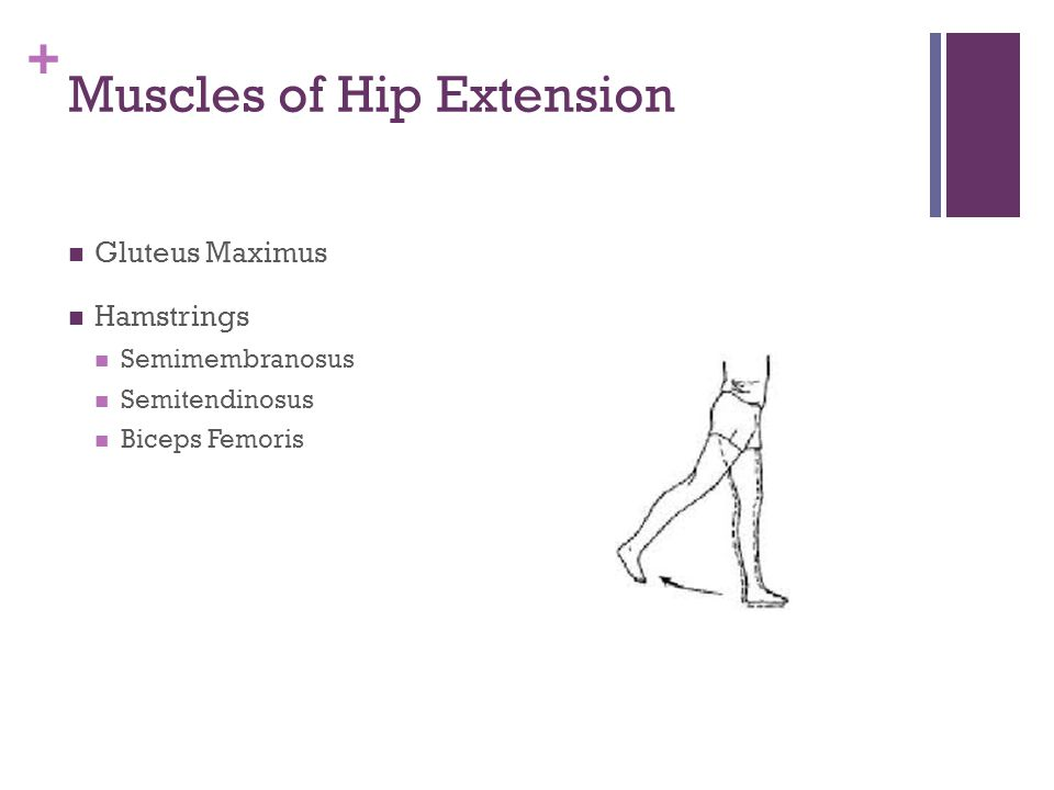 + Muscles of Hip Abduction Tensor Fascia Latae Iliotibial Band (IT Band)