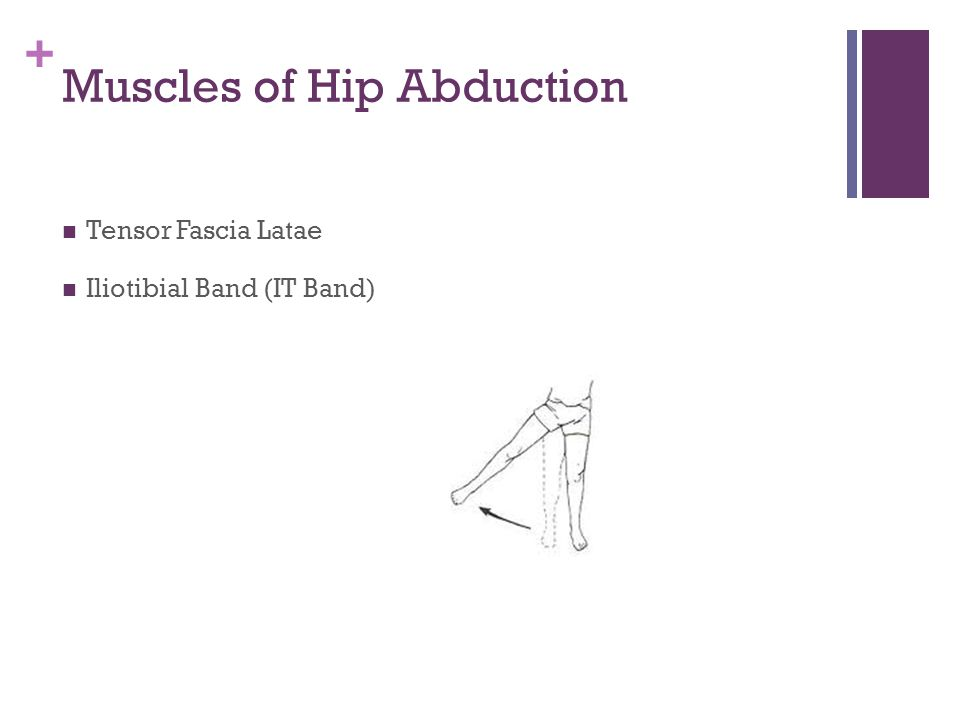 + Movements of the Knee What directions does the knee move? Flexion Extension NO rotation