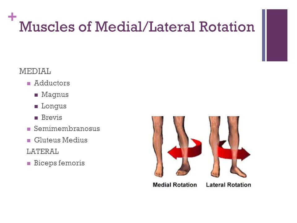 + Psoas Major Origin: T12 and lumbar vertabrae Insertion Lessor trochanter of femur Action Flexor of hip or thigh on pelvis
