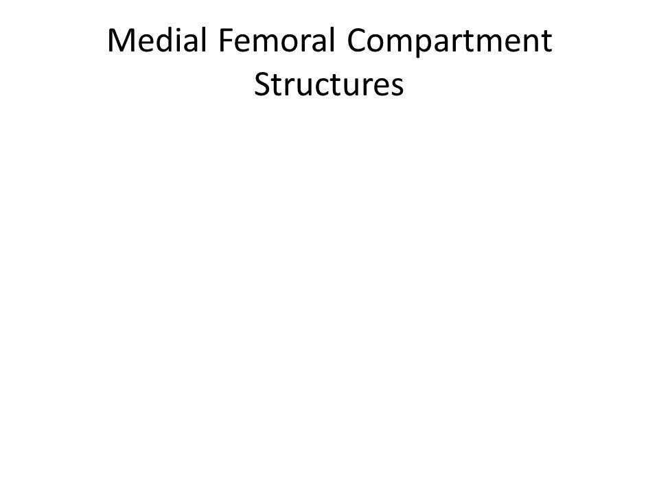 Medial Femoral Compartment Structures
