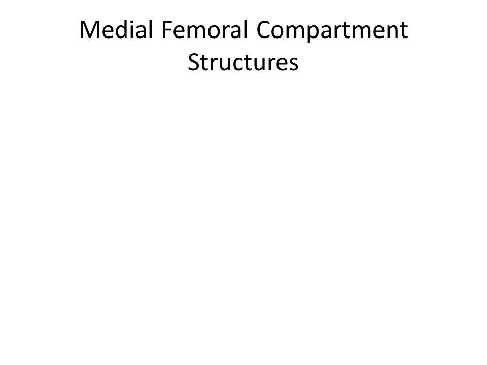 Anterior Femoral Compartment Structures