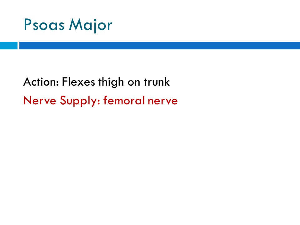 Psoas Major Action: Flexes thigh on trunk Nerve Supply: femoral nerve