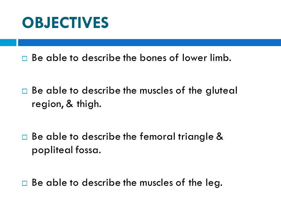 OBJECTIVES  Be able to describe the bones of lower limb.  Be able to describe the muscles of the gluteal region, & thigh.  Be able to describe the