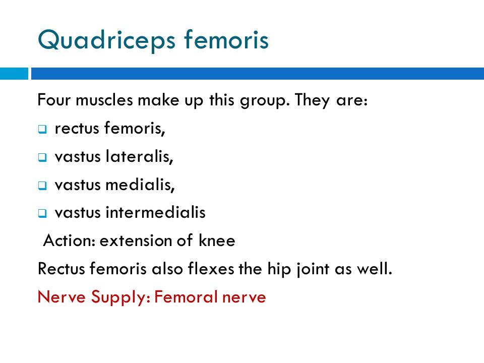 Quadriceps femoris Four muscles make up this group. They are:  rectus femoris,  vastus lateralis,  vastus medialis,  vastus intermedialis Action: