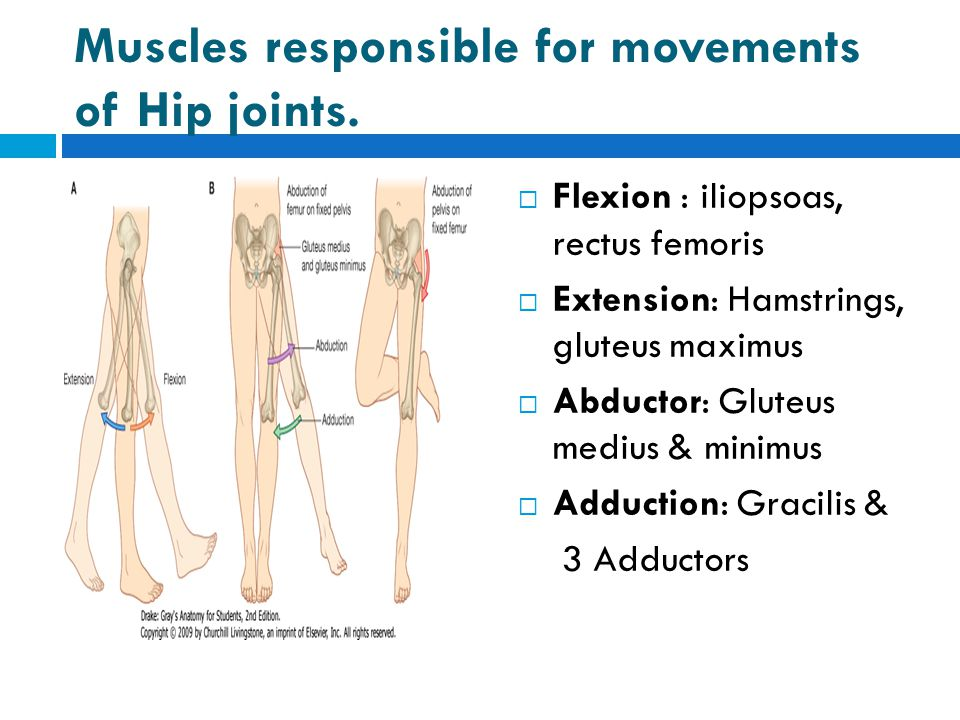 Muscles responsible for movements of Hip joints.  Flexion : iliopsoas, rectus femoris  Extension: Hamstrings, gluteus maximus  Abductor: Gluteus me