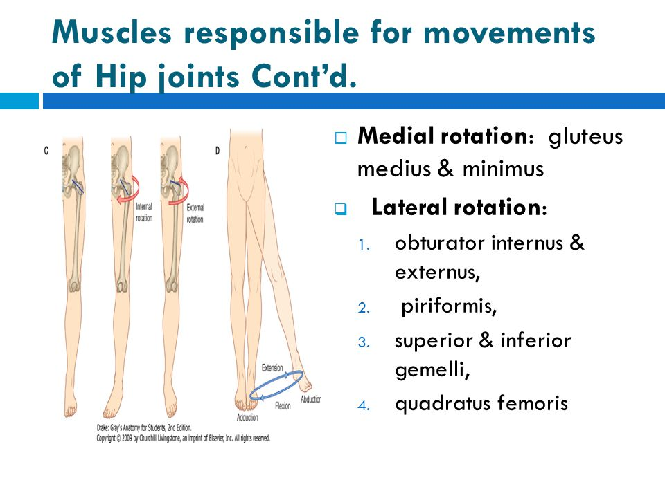 Muscles responsible for movements of Hip joints Cont'd.  Medial rotation: gluteus medius & minimus  Lateral rotation: 1. obturator internus & extern